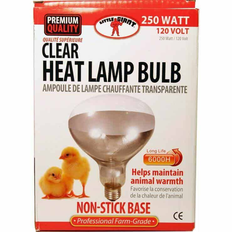 Incandescent poultry lighting