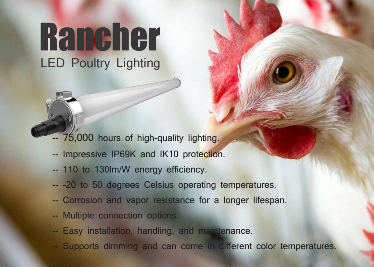 Rancher-Poultry-Lighting-1200x857