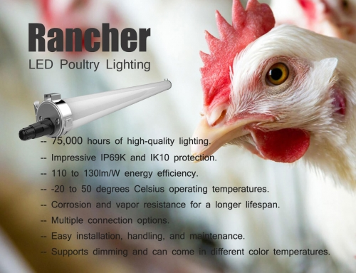7 Awesome Facts You Should Know About LED Poultry Lighting